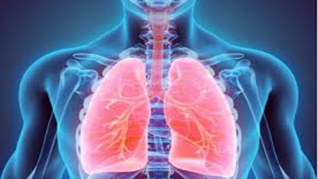 谈病说医:72、肺