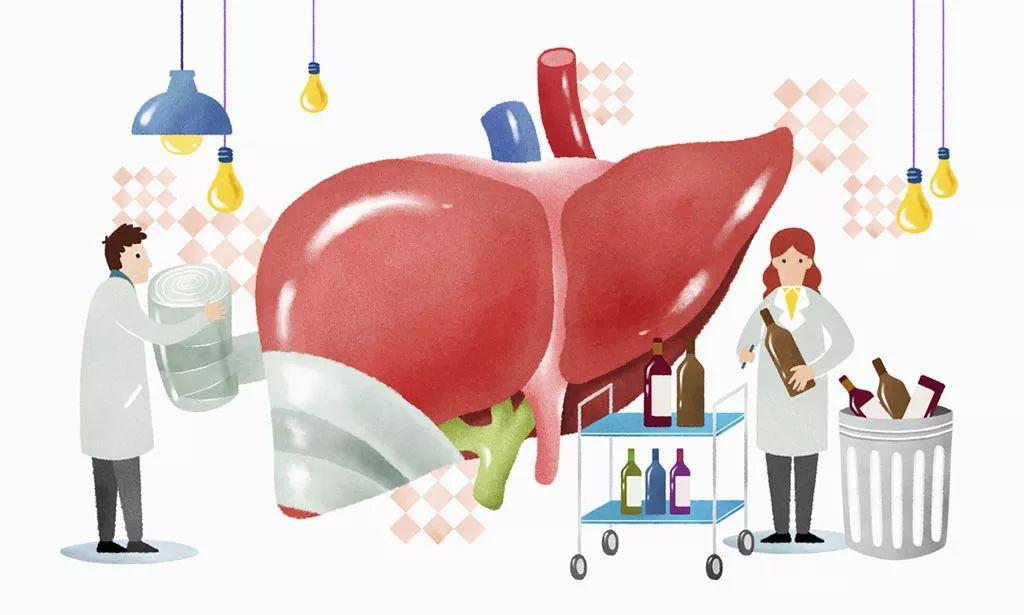 養護排毒的肝功能