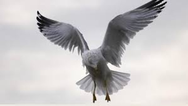 飞鸟身上相背的双翅